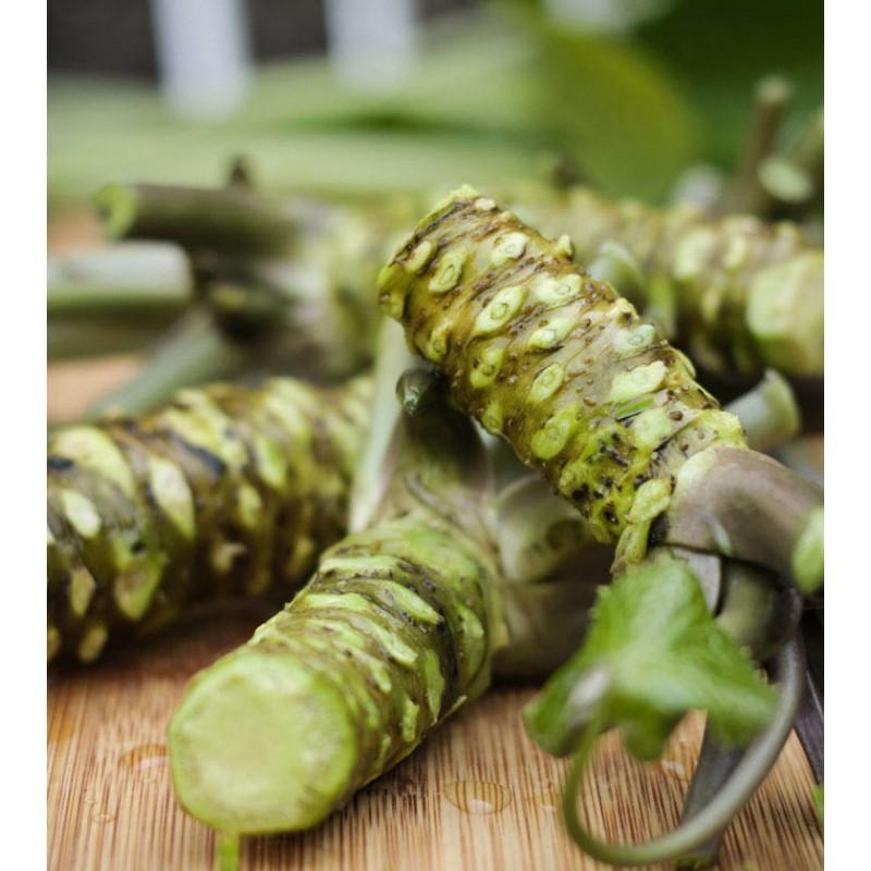 fresh wasabi wasabi plant
