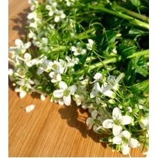 Wasabi Flowers 50g