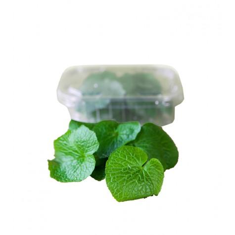 Wasabi Baby Leaf 30g