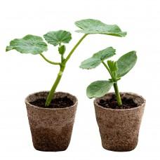 Squash Plant Bundle – 1 of Each