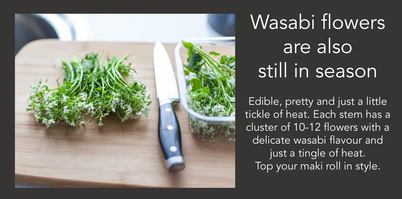 Fresh Wasabi Flowers